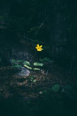 yellow-690550_1280
